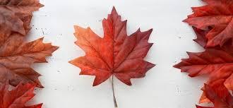 Запрос на предоставление паспорта в ВЦ Канады